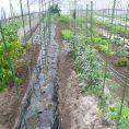 自家栽培ビニールハウスでは、旬野菜が30種