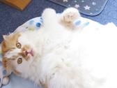 猫カフェ ルアナのおすすめ料理3