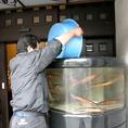 活イカ踊りの拘り2はこだての活イカ専用水槽で新鮮な状態を維持