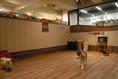 雨の日や真夏・真冬でも楽しめる室内ドッグラン。床は滑り止め加工・クッション性の高い床材を使用しています。