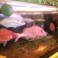 ぎょぎょっ!な新鮮魚