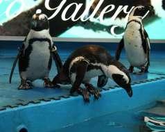 ペンギンのいるダイニングバー沖縄 の特集写真