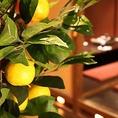 沢山の柚子たちがいらっしゃいます♪♪新宿駅周辺の居酒屋をお探しでしたら是非、西新宿完全個室居酒屋 柚柚~yuyu~ 西新宿店をご利用ください★