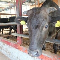 オーナー自ら中西牧場に出向き牛を選んで買い付け!