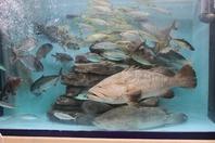水族館にいるような気になる豊富な魚の数