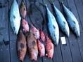 本日も大漁、大漁♪