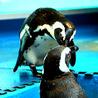 ペンギンのいるダイニングバー沖縄 のおすすめポイント1