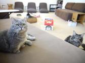 猫カフェ ねこの部屋 あまえんぼう 高槻のグルメ