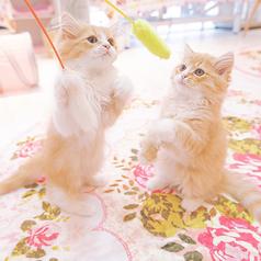 CAT CAFE 猫ちゃんといっしょ