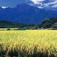 【有機無農薬 こしひかり】<福富町>有機無農薬栽培 安心 安全のこしひかり