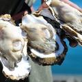 料理メニュー写真殻付き牡蠣(3個)