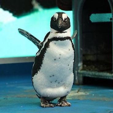 ペンギンのいるBARの雰囲気1