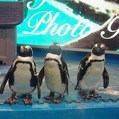 ペンギンのいるBARの雰囲気2