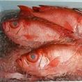 鮮魚は養殖ものを一切使用していません♪その為に【大畑鮮魚】から仕入れています♪新鮮な鮮魚盛り合わせがおススメの逸品です☆
