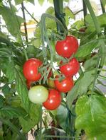 日替わりのおススメ料理!自家製無農薬野菜も豊富!