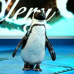 ペンギンのいるダイニングバー沖縄 の雰囲気1