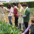 羽田農園へ野菜の収穫のお手伝いしました!