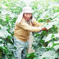 農家直送★安心安全の野菜