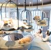 猫カフェMOCHA(猫カフェモカ)渋谷センター街店 image