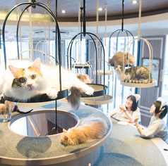 猫カフェ MOCHA モカ 渋谷センター街店の写真