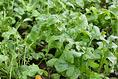 2月5日現在、葉物野菜が充実しています!