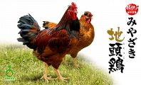 自慢の宮崎地頭鶏!!!