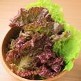 サンチュやサニーレタス、キャベツなど包むにはピッタリの葉物のお野菜も常時たっぷりご用意♪ハンサムレタスやフリルレタスなど、旬に合わせてベストなものをご提供させていただいております。