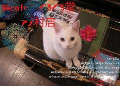 猫カフェぐるぐる堂 本店