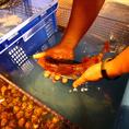 卸直営店のプライドにかけて、自慢の海鮮をご堪能下さい!
