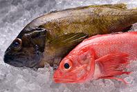 漁師が命がけで獲った魚
