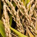 ご飯は、【秋田こまち】の玄米を毎日、店舗で精米しております。※お写真はイメージです。水(飲用・料理用)は浄水を使用しています。