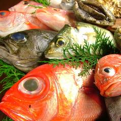 魚料理 沖の瀬の特集写真