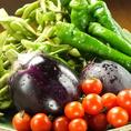 ミチヤの料理へのこだわりは鮮魚だけではありません!お野菜もとっても新鮮でみずみずしいものばかり★特に新鮮季節野菜ばかりを使用したクリームバーニャカウダは絶品です!!こんなお野菜今まで食べたことない…美味しすぎる!!
