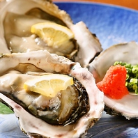 【数量限定】特大!岩牡蠣