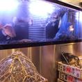 店内にある生簀☆新鮮でおいしいお魚が食べれますよ♪