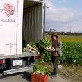 朝摘みした近江野菜を自家トラックに搬入