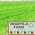 サムギョプサルの特選素材はサンチュ。ベジテジやのサンチュは「女性の手の平サンチュ」一番包みやすいサイズ・味・柔らかさにこだわって自社農園で毎朝収穫、直送。新鮮なサンチュをお楽しみください♪