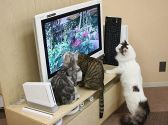 Cat Cafe ねころびの雰囲気3