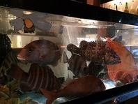 生簀完備!!美味しいお魚を新鮮なまま食べられます!