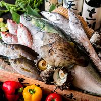 とれたて新鮮な魚介を存分に味わう
