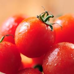 料理メニュー写真豊栄産プチトマト