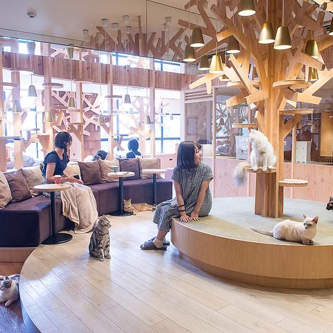 猫カフェ MOCHA モカ 池袋西口店の写真