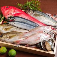 新鮮な旬の魚介を仕入れ!