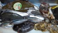 今週も旬魚や貝類や野菜色々入荷しました!