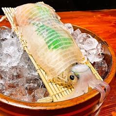 泳ぎイカ 九州炉端 弁慶 福山のおすすめ料理1