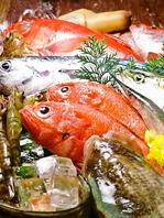 市場から仕入れる新鮮魚!