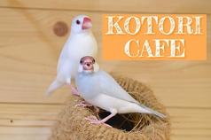 ことりカフェ 巣鴨の写真