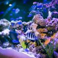 熱帯魚に囲まれて…幻想的な空間です。