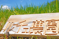 契約農家「ルーチェ農園」◆素材を熟練シェフ自ら仕入れ