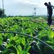 契約農家から仕入れる地元群馬県産の朝採れ新鮮畑野菜。